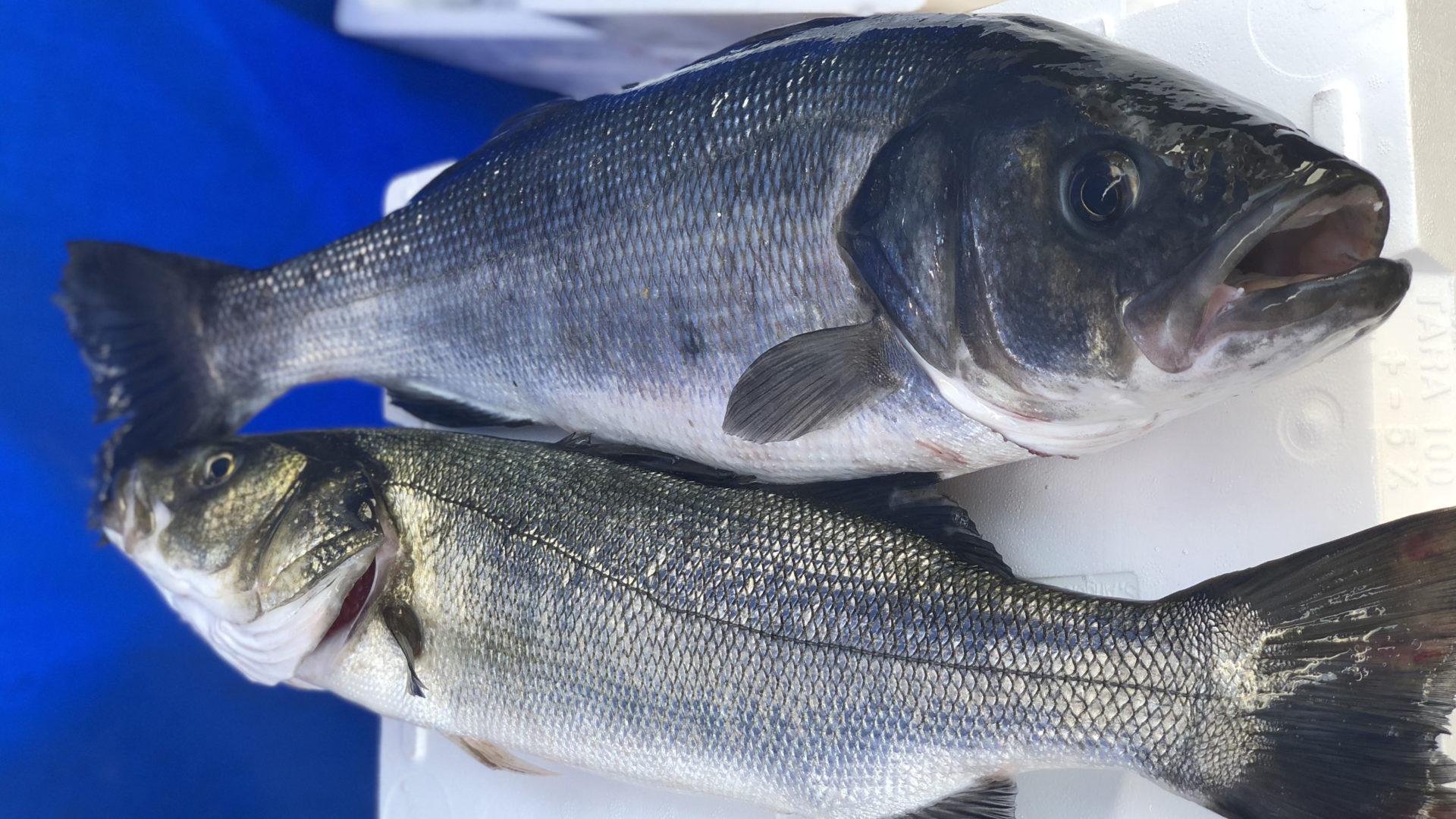 Grego Pesca